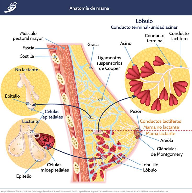 CAMA_fisiologia