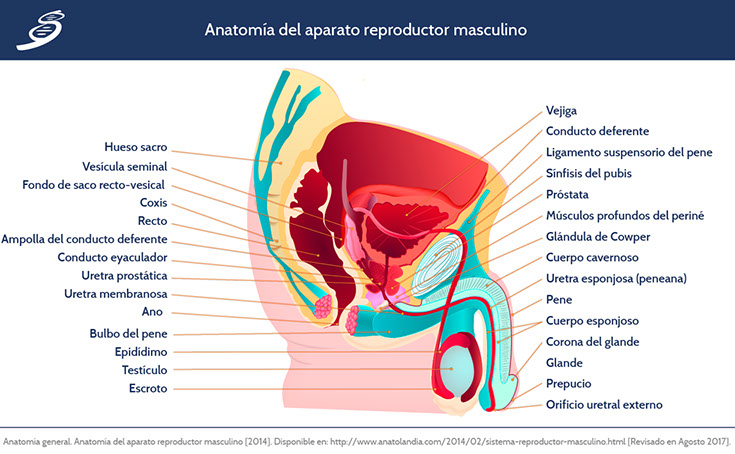 CAPRO_fisiologia